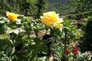 Hotel Il Caminetto - Island of Elba: our flowers